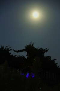 My attempt to photograph the night moon over the vineyard. I promise to get better at this.
