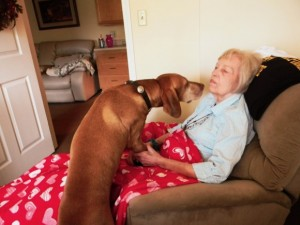 Not quite Dove Hunting But a visit with Love Dove Grandma makes his day a bit better.  Isn't the love of a dog the best? I know my puppies make my life better and that of my family.